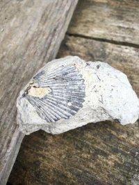 Fòssil